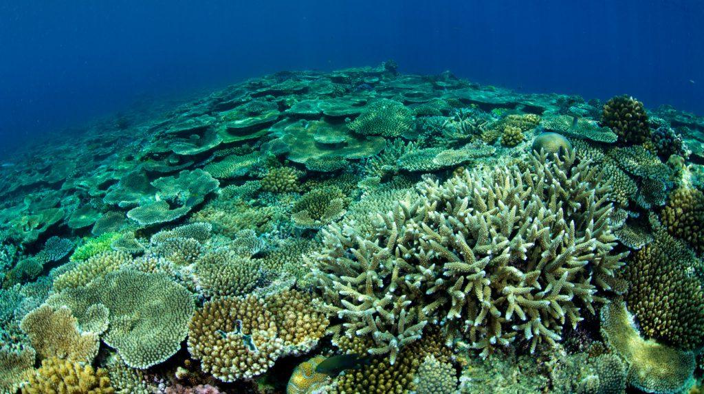 サンゴ礁保護活動プラン