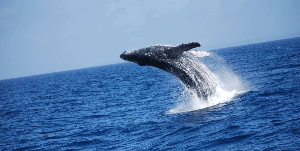 Gallery-Whale watching1